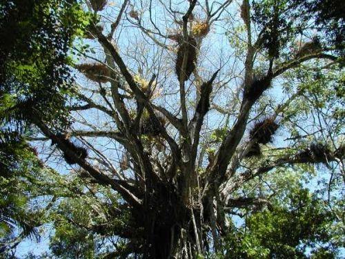 Regenwald tropisches australien fantastic for Boden im regenwald